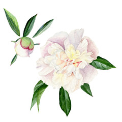 Watercolor illustration of a white peony with leaves and Bud. Set of floral elements isolated on white background