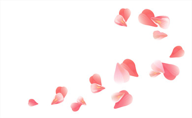 Pink Red flying petals isolated on white. Sakura Roses petals. Vector