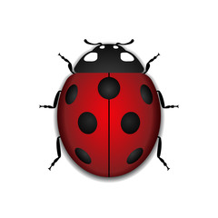 Ladybug small icon. Red lady bug sign, isolated on white background. 3d volume design. Cute colorful ladybird. Insect cartoon beetle. Symbol of nature, spring, summer. Vector illustration