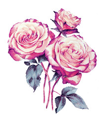 Roses bouquet watercolor  drawing