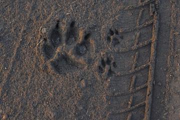 Animal footprint in sand