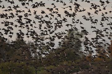 Szukaj Zdjęć Ptaki W Locie