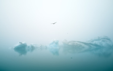 Tern birds fly over smal ice bergs in  jökulsárlón, Iceland