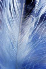 Feather birds close-up. Macro photography.