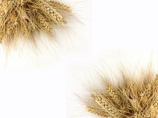 Obraz zboża, kłosy, wieś, pszenica - fototapety do salonu