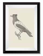 Vintage Retro Vector Drawing Illustration of an Ouzel Bird Animal in a Frame. Perfect for Web Design, Shirts, Scrapbooking, Logos, Badges. Great as a Graphic Ressource for Illustration Work.