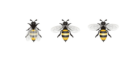 Different Bees illustration isolated on White  Background