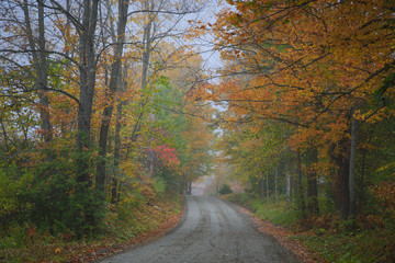 Road Winding Through the Autumn Color