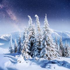 Dairy Star Trek in the winter woods.