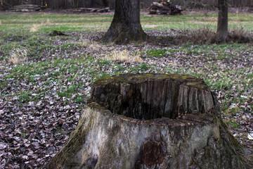 Baumstumpf