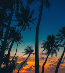 Wall Mural - Silhouette of palm tree at beautiful tropical sunset