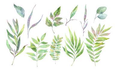 Hand drawn watercolor illustration. Spring leaves and branches. Floral design elements. Perfect for...