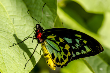 Butterfly Varieties at Botanical Gardens