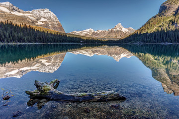 Reflection with a dead tree in the water at lake ohara in yoho national park, British Columbia, Canada.