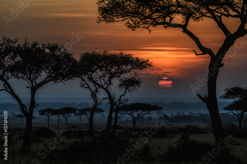 Blue Wildebeests at Sunrise, Masai Mara, Kenya  № 1443673 без смс