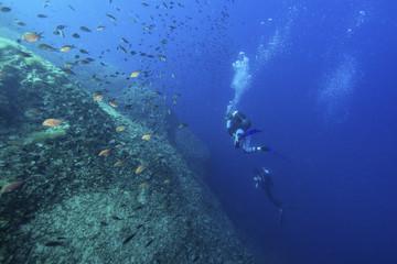 Divers exploring school of fish, Dalmatia, Croatia