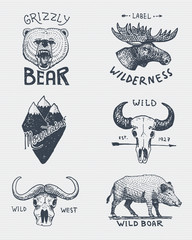 set of engraved vintage, hand drawn, old, labels or badges for camping, hiking, hunting with grizzly bear, moose, mountain peak skull of buffalo and wild pig, boar.