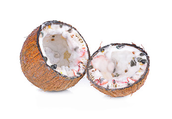 moldy coconut  on white background