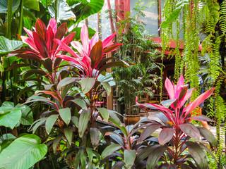 Thai house in a tropical garden