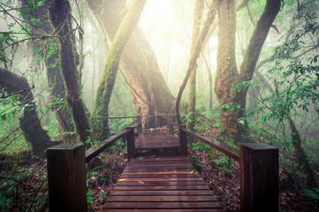 Wooden walkway in the jungle.