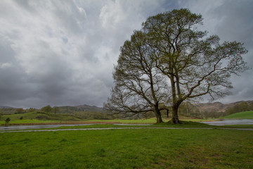 Near Wray Castle