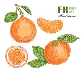 Orange isolated on white background. Fruit vector illustration sketch
