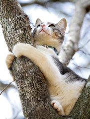 A cute young cat in a tree learning how to hunt.
