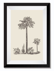 Vintage Retro Vector Drawing Illustration of a Palm Tree Plant in a Frame. Perfect for Web Design, Shirts, Scrapbooking, Logos, Badges. Great as a Graphic Ressource for Illustration Work.
