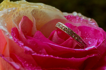 Romantic roses and rings for Valentine's Day