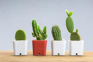 Photo sur Aluminium Cactus Small Cactus