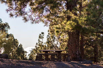Bench in high clouds over pine forest on Tenerife