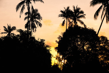 Palm Trees Silhouettes at Sunrise
