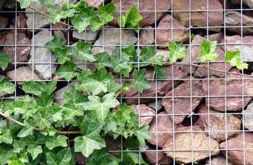 Bilder und videos suchen bepflanzen - Bepflanzter stuhl ...