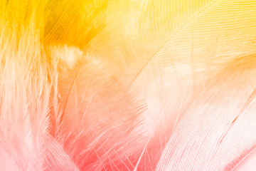 Color trends feather texture background