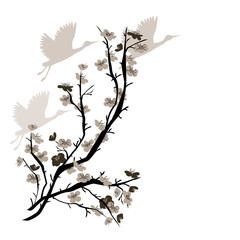 Hand drawn illustration with Chinese Plum tree and crane birds. Vector isolated on white.