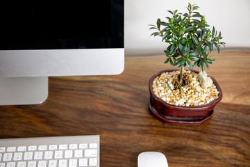 Bonsai ficus plant computer office desk