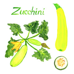 Zucchini plant with flowers, leaves and ripe zucchinis and slice, isolated hand painted watercolor illustration
