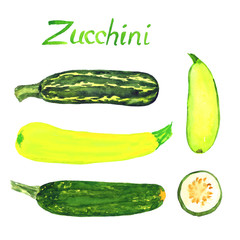 Zucchini variety and slice, isolated hand painted watercolor illustration