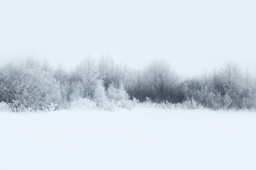 Beautiful winter forest landscape, trees covered with snow