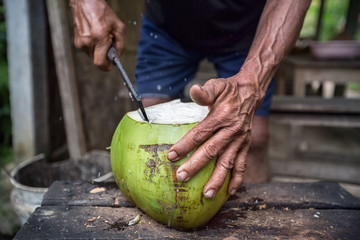 Farmers hands cut coconut