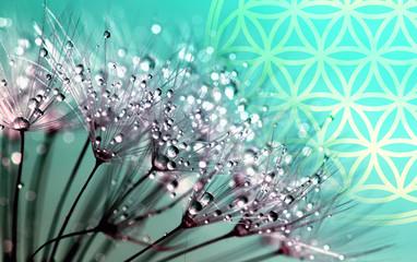 Blume des Lebens - Leichtigkeit - Frisch