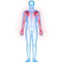 Human Body Bone Joint Pains Anatomy (Upper Limbs)