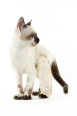 white cat with a broken leg on a white background