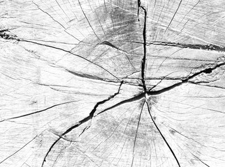 white, grey wood texture. background