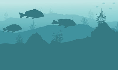 Silhouette of underwater beauty landscape with fish