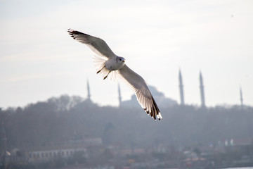 Seagulls flying in sky  in Istanbul
