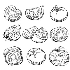 Hand drawn tomato set.