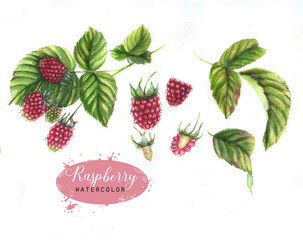 Hand-drawn watercolor illustration with different berries on the white background: raspberry and leaves