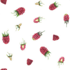 Hand drawn seamless pattern with watercolor raspberries. Berries on the white background.