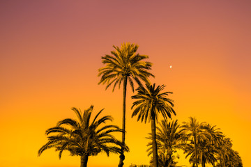 Palm trees against golden sunset